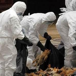 Grippe aviaire : L'épidémie sous contrôle, selon……..